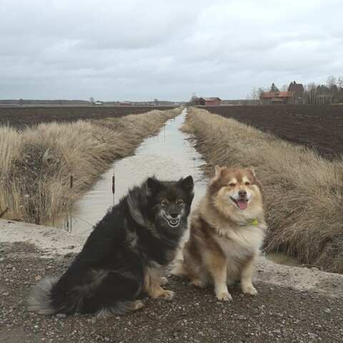 Walk with dogs.