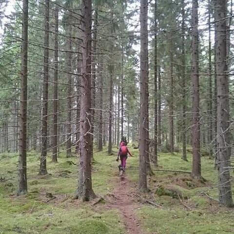 Guided tour in Muuratsalo forests