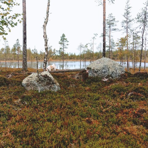 Finnish hunting culture