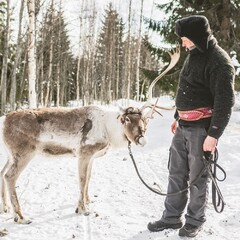 Walk with the reindeer