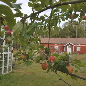 Summer Day in Rauma Archipelago, Nurmes island, Rauma