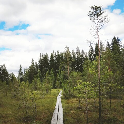 Explore the finnish nature !