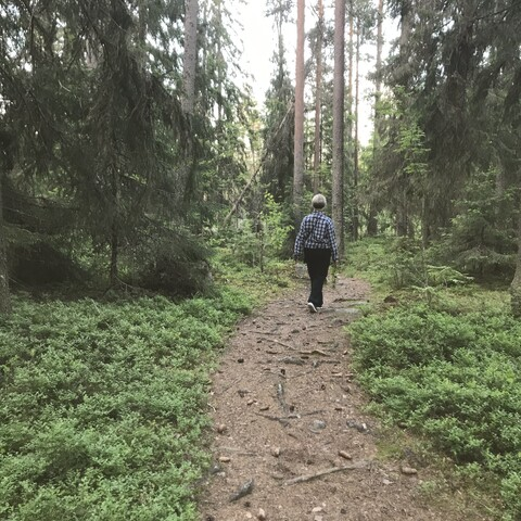 Recover in the forest