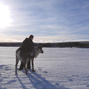 Walking with the reindeer, Rovaniemi