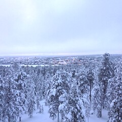 Walk with a local in Ounasvaara hill in Rovaniemi
