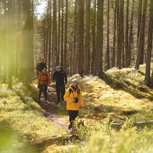 Forest hike in the wilderness of Karelia, Kesälahti