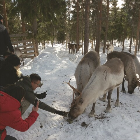 Reindeer Farm Home Visit