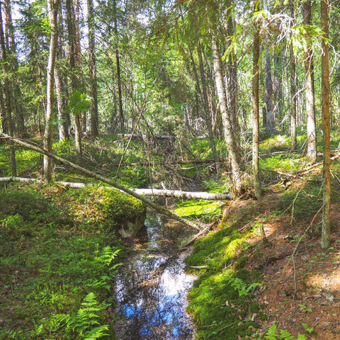 Day trip to Helvetinjärvi National Park