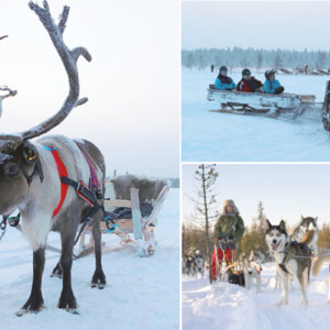 Arctic experience with Huskies, reindeer and snowmobile sledges, Levi