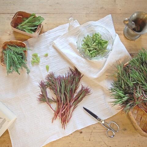 Wild Herb Course in Ilomantsi