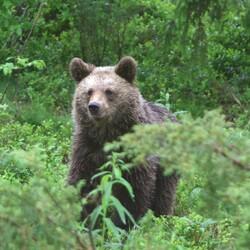 Karhuyö Martinselkosessa