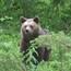 Bear night in Martinselkonen