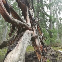 Luontoretki Jyväskylässä