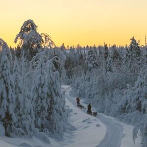Sleddog tours, Rovaniemi