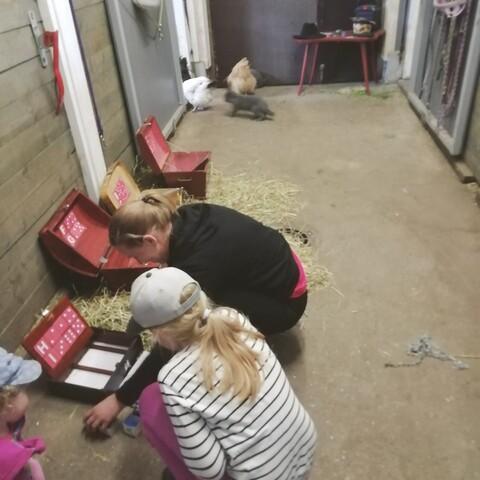 Farm Escape Forssa