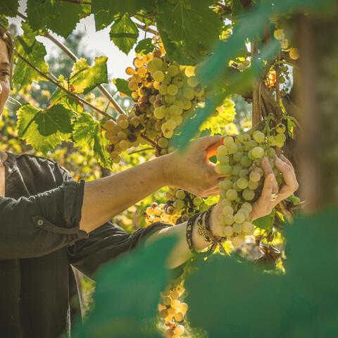 Vierailu viinitilalla ja kaupunkikierros Frascatin alueella
