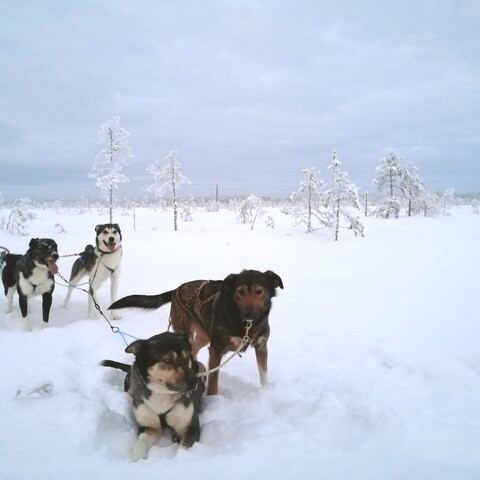 3 days: Into the Wild with Sleddogs