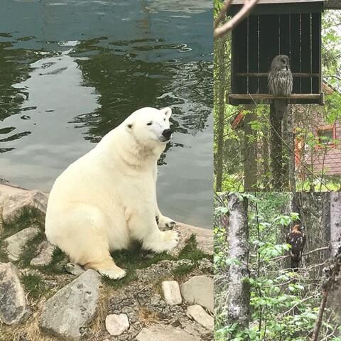Rovaniemi to Ranua zoo day trip