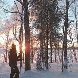Kävelykierros lumikengillä - Hupisaaren puut talviasussa