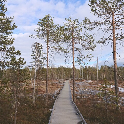 Walk with a local in Ounasvaara in Rovaniemi
