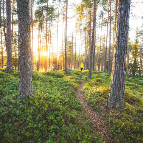Forest hike in the wilderness of Karelia