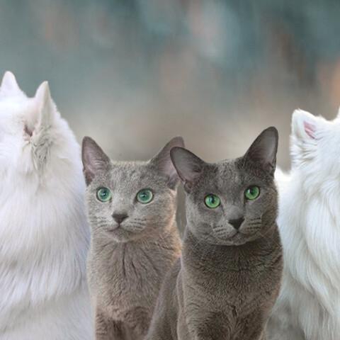 Meet & greet cats & small dogs