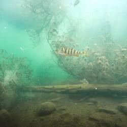 Koe laitesukelluksen unohtumaton elämys avovedessä!