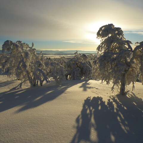 Arctic Wilderness Survival Online Experience in Lapland