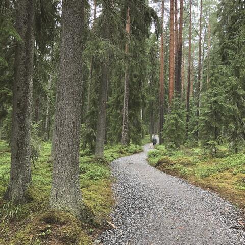 Elämyksellinen Torronsuo 10 km